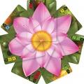 Lotus - English